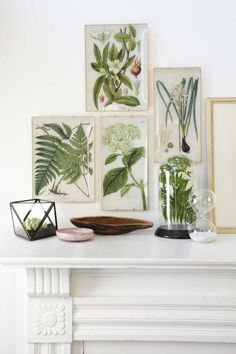 """These DIY trays recall the wares of artist John Derian—only ours cost just a few bucks a pop. Step 1: Download the image of your choice (originally from thegraphicsfairy.com) here. Each image is presized to fit the glass trays shown here (narrow, $8.46; 6""""W x 12""""L; wide, $9.25; 8""""W x 11""""L; behrenbergglass.com). Use a laser printer to print out the image, at home or at a copy shop. Step 2: Flip your tray upside down. Spray with glass cleaner and wipe down to remove any fingerprints or…"""