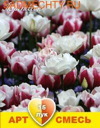 """40005 Арт-смесь """"Пломбир"""". Тюльпаны махровые поздние: Вироза, Маунт Такома (15 луковиц)"""