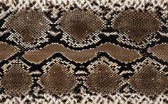 Resultado de imagem para snake texture