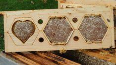 Comb Honey, Bee Hive Plans, Honey Packaging, Hobby Farms, Bees Knees, Beekeeping, First Night, Honeycomb, Packaging Design