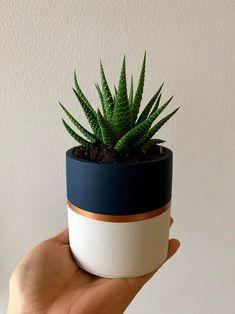 Cement Flower Pots, Cement Planters, Diy Planters, Concrete Pots, Succulent Planters, Painted Plant Pots, Painted Flower Pots, Navy And Copper, Faux Succulents