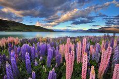 Tekapo See in Neuseeland