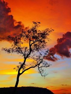 Trees at sunset - Rondonopolis, Mato Grosso, Brasil Beautiful Sky, Beautiful Landscapes, Beautiful World, Beautiful Places, Tree Silhouette, Silhouette Pictures, Between Two Worlds, Pretty Pictures, Pretty Pics