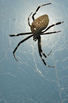 spider Photo by ponco sujatmiko -- National Geographic Your Shot