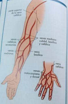 🌷🌷's media content and analytics Medicine Notes, Medicine Student, Medicine Book, Medical Students, Nursing Students, Medical Anatomy, Body Anatomy, Phlebotomy, Nursing Notes