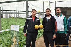 El nuevo galia de HM Clause #agricultura #agriculture #seeds #greenhouse #inverandero #melon