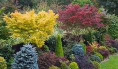 Gardening Autumn - Acer palmatum Sango-kaku and Acer palmatum Trompenburg Japanese maples in autumn Small Japanese Garden, Japanese Maple, Japanese Gardens, Amazing Gardens, Beautiful Gardens, Landscape Design, Garden Design, Creative Landscape, Garden News