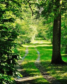 FARM LANE--Nature Photography, Michigan Photography, Summer, Trees, Woodland, Picture of Farm Lane, Dirt Road, Country Road, Shadows, Green