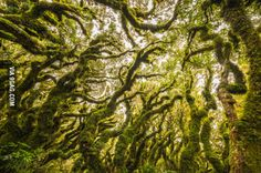 Another reason to visit the magic land of New Zealand. the eerie, moss-covered trees in Goblin Forest on the slopes of Mount Taranaki… Goblin, Enchanted, Tree Planters, Mysterious Places, Forest Park, What A Wonderful World, Beautiful Pictures, Scenery, Image