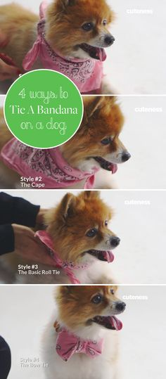 With just a few minutes and a bandana, your dog can show off any of these 4 looks! Perfect for a special occasion or an every day look. Puppy Obedience Training, Dog Training, Training Tips, Pet Corner, Stop Dog Barking, Cute Dog Pictures, Dog Hacks, Old Dogs, Dog Behavior