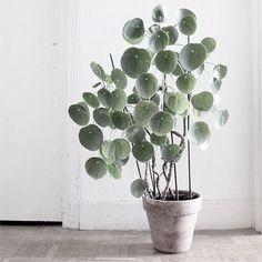 sieh nur! es ist sogar eine it-pflanze!!! More