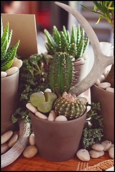 succulent_and_cacti_centerpieces