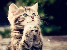 images of cute kittens | Cute Cats Pictures