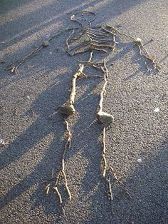 Making skeletons (using sticks) — Creative STAR Learning