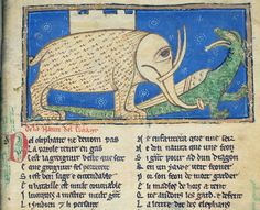 "little Elephant with a big eye  Cambridge Trinity College Library, ms. O.2.14 Rochester Bestiary ""Guillaume le clerc"""