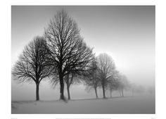 Winter Trees III