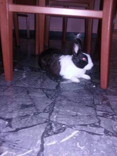 Il mio coniglietto♡♡♡♡♡