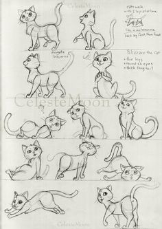 Blizzard the Cat Concept Poses by CelesteMoon.deviantart.com on @deviantART