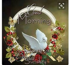 Good Morning Sweet Friends. Have a blessed Sunday❤
