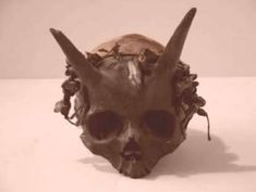 Human Skulls with Horns Discovered in Pennsylvania: Demons, Children of the Nephilim or Something Else? Towards the end of the century, a burial mound at Sayre, Bradford County, Pennsylvania revealed several strange skeletons. Human Skeleton, Human Skull, Alien Skull, Creepy, Scary, Skull With Horns, Archaeological Discoveries, Archaeological Finds, Bizarre