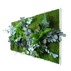 40 x 18 no care green wall art large plant painting real preserved plants in reclaimed wood. Black Bedroom Furniture Sets. Home Design Ideas