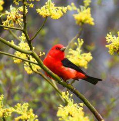Vibrant Bird  Photography by Sandra Walters