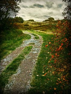 road to wonder