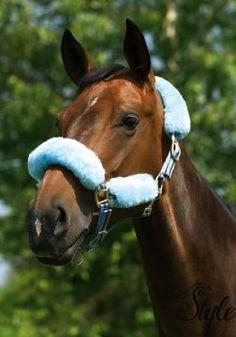 d651e4bfd1 A(z) HKM Scotland nevű tábla 30 legjobb képe | Scotland, Equestrian ...