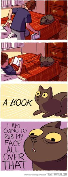 Living with cats. Every time. HAHAHA omg that's what my cat does EVERY time he sees me holding a book! XD