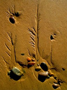 Beach Fractals  Branching patterns, mimicking tree-tops or roots, are one of many examples of fractals seen in nature.    Image: Martyn Gorman