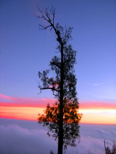Scene that always makes miss ,standing on a cloud,willirang Mt - indonesia