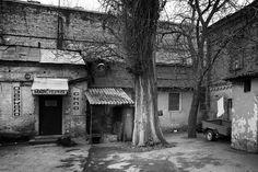 Oleg Tishkovets - Kiev - Ides of March. Trees