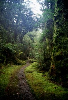 I love old pathways. Sometime they must have led someone somewhere. lindasinklings:    moss covered.  via (elorablue)