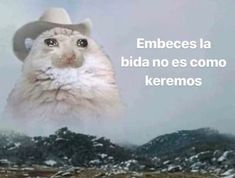 Best Memes, Dankest Memes, Funny Memes, Reaction Pictures, Funny Pictures, Memes Lindos, Sad Cat, Weird Cats, Kids Icon