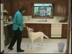 Tips, techniques and info for best dog training tricks -> You need to really watch what type of food your pet dog eats. Puppies can eat plenty of calorie filled foods because they are still growing.If an adult eats this food, it could cause weight gain. Dog Clicker Training, Best Dog Training, Agility Training, Operant Conditioning, Puppy House, Aggressive Dog, Dog Hacks, Dog Eating, I Love Dogs