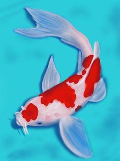 Koi Fish belongs tot he C. carpio specie. In this tutorial, we will draw Koi Fish.