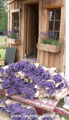 Lavanda, A Flor Da Limpeza! Always love the lavender! www.JudysCreatveAdventures.com   - Women's Tours