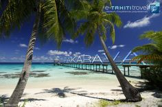 Fakarava, un atoll des Tuamotu où il fait vraiment bon vivre... son lagon turquoise, ses plages de sable blanc et surtout sa faune aquatique très riche !!