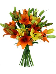 Asiatic Lillies great long lasting cut flowers