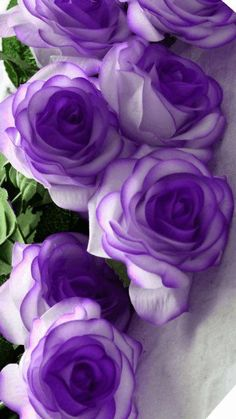 27 Ideas for wedding flowers lilac lavender purple roses Beautiful Rose Flowers, Exotic Flowers, Amazing Flowers, Colorful Flowers, Purple Flowers, Red Roses, Beautiful Flowers, Black Roses, Roses And Violets