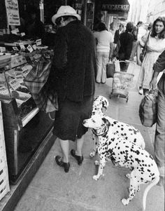 Beautiful dogs and boy I sure miss seeing people with their grocery buggy things