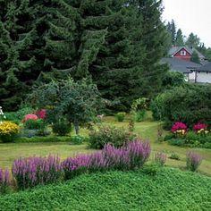 Pitsi-Pirtti Finland, Garden Design, Plants, Gardens, Outdoor Gardens, Landscape Designs, Plant, Garden, House Gardens