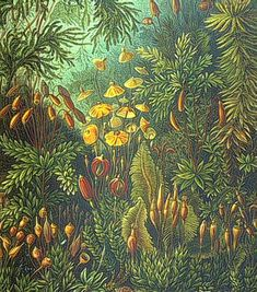 """Botany online: Bryophyta - from ERNST HAECKEL: 'The Art Forms of Nature"""" (1899)"""