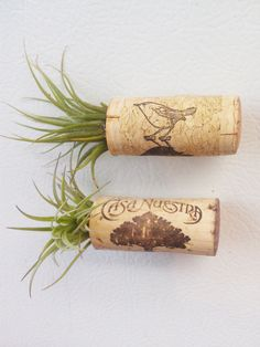 Air Plant Garden Magnet Pin & Refrigerator Decor  MADE TO ORDER - two. $10.00, via Etsy.