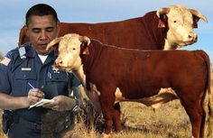 """Will Obama's Obsession with """"Illegal Cattle Grazing"""" Drive US to Civil War?"""