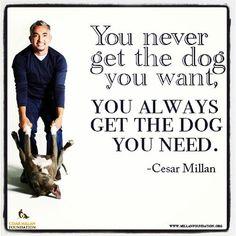 cesar millan and benson - Bing images I Love Dogs, Puppy Love, Cute Dogs, Cesar Millan Videos, Ceasar Millan, Rottweiler Quotes, Dog Training Videos, Training Tips, Dog Whisperer