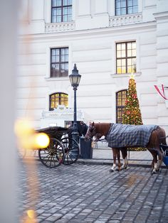 Avec Sofie blog l Wien -vVienna in Christmas is the most beautiful city I have ever traveled during Christmas time. #Vienna #christmasmarket #joulu #Christmas #christmasinspiration #tarvelblogger