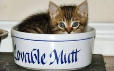 Lovable Mutt More cute images of cats and kittens, visit http://pewpaw.com/lovable-mutt/