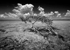 Keys Collection – Clyde Butcher | Black & White Fine Art Photography