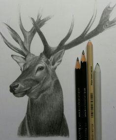 oh, deer! drawing november '15